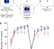 Effect of modafinil on learning and task-related brain activity